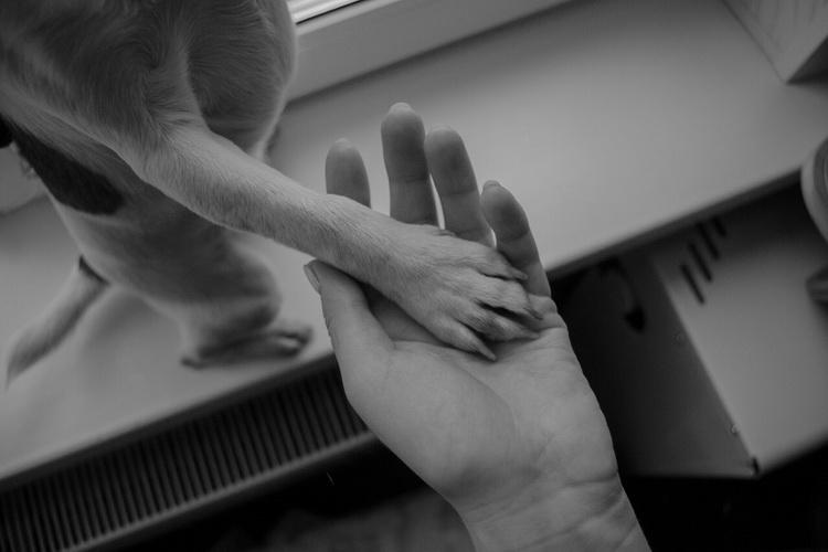 """""""Всегда рядом со мной"""". Дипломная работа Инны Латыш, кафедра искусства фотографии"""